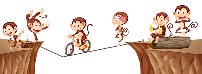 Monkeys playing on the rope