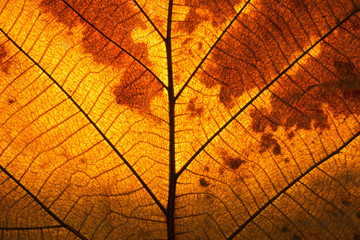 leaf in autumn show abstract texture background detail