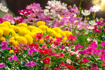 Flowers in the garden./ Landscaped flower garden with lots of colorful blooms with sun flare.