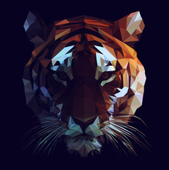 Vector Tiger Illustration