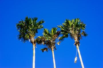 Three palm peaks