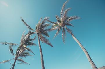ヤシの木,ハワイ,