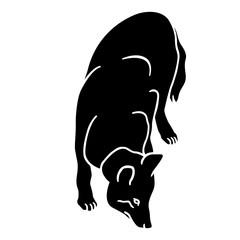 wolf silhouette, black