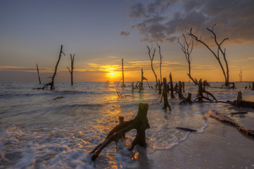 Dead trees in the sea at an eroded coastal line at Kelanang beach, Malaysia at sunset.