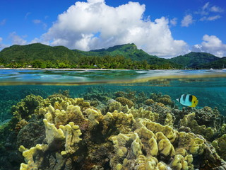 Split view over and under water surface in the lagoon with the coast of Huahine island above waterline and corals underwater, Pacific ocean, French Polynesia