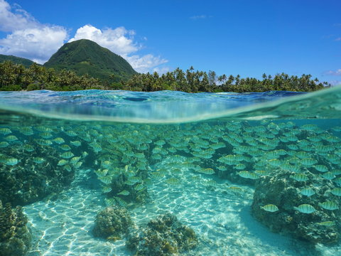 Split view above and below water surface near a tropical shore with a school of fish underwater, Pacific ocean, Huahine island, French Polynesia