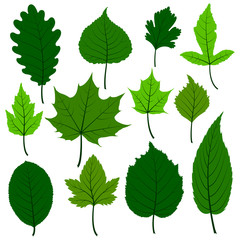 Set of twelve  spring leaves.