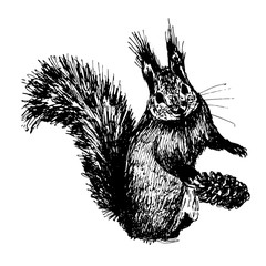 small furry squirrel with a big tail and fir cones sketch hand-drawn ink vector illustration