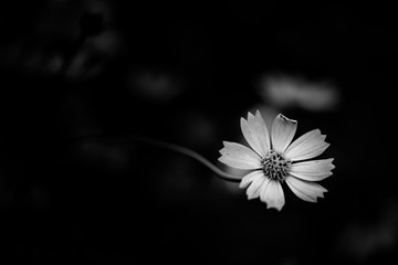 Abstract black and white flowers background
