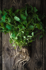Green mint with roots on a wooden table