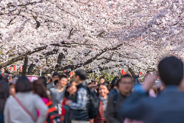TOKYO, JAPAN -March 29 2015: Many People enjoy with Cherry blossom festival at Ueno Park, March 29 2015 in Tokyo, Japan. Viewing cherry blossom is a traditional Japanese custom.
