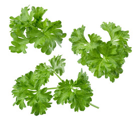 Parsley herb set path included isolated on white background
