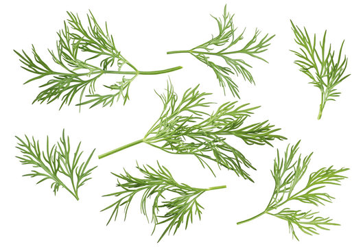 Dill herb set options path included isolated on white background