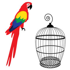 Parrot and birdcage