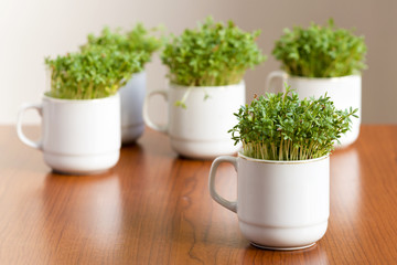 Cress or watercress