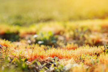 Wall Mural - Close up of colorful sunny spring meadow, grass growing