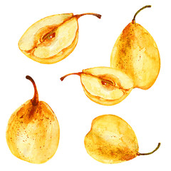 Pear, half of pear hand drawn vector watercolor illustration on white background