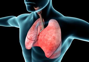 Apparato respiratorio, polmoni, raggi x, anatomia corpo umano