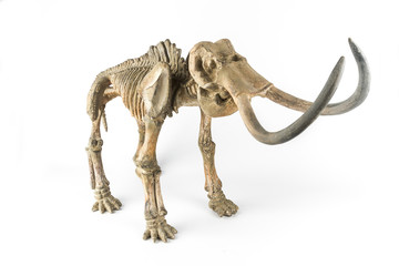 Skeleton of a mammoth
