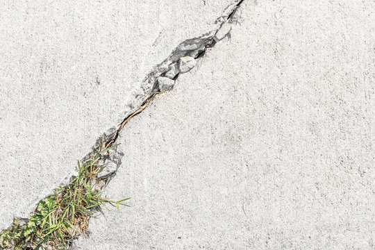 Grass and weeds growing in cracked sidewalk