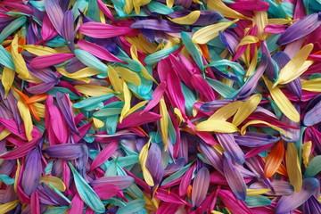 Spring Flower Petals