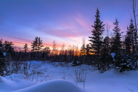 Sunset over a snowy meadow in the pine forest in northern Wisconsin.