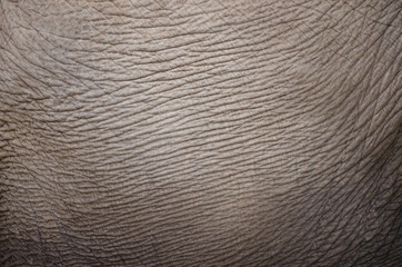 Elephant Skin Hide Leather Closeup