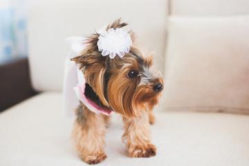 Nice small dog