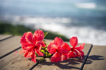 Red hibiscus and the sea-3