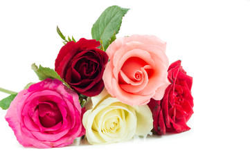 Different color roses on white background