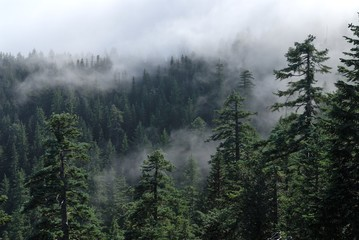 Fog cover the forest. Misty forest view from Larch Mount. USA Pacific Northwest, Oregon.