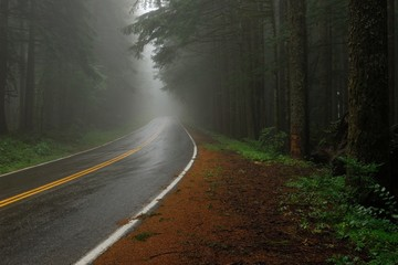The road in the Misty Forest. Larch Mountain Road, Oregon.