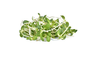 sunflower sprouts isolated on the white background.