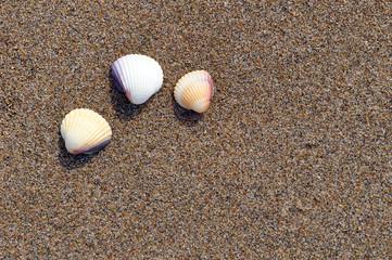 3 Muscheln am Strand