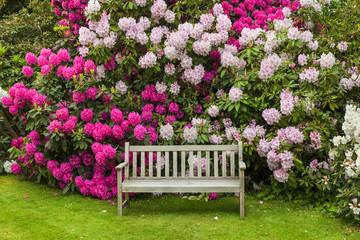 Fototapeta premium Rododendronowy ogród z drewnianą ławką.