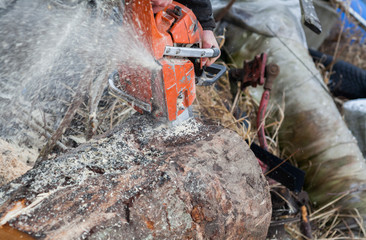 Close-up of male hands cutting trunk with chainsaw and many tree trunks in the background