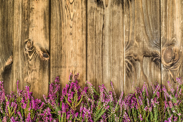 Forest heather flowers on rustic wood background. Flowers backgr
