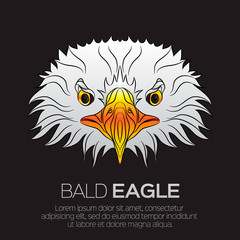 The head of American bald eagle, isolated on black background. Beautiful bird. Face portrait of eagle. Vector illustration