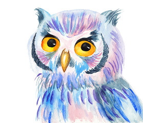 Bright colorful watercolor illustration of an owl on white background