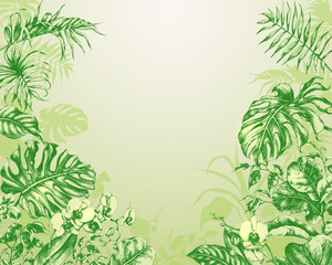 Natural  Green Background with  tropical plants.