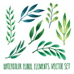 Vector floral set. Colorful floral collection with leaves, drawing watercolor. Spring or summer design for invitation, wedding or greeting cards. Set of floral elements for your compositions.
