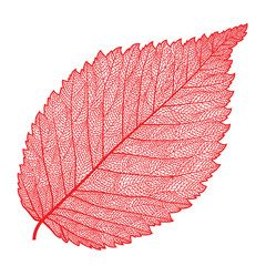 vector skeletonized leaf