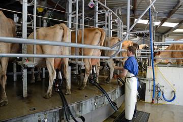 milking time