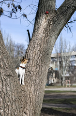 charming wire Fox Terrier, dog on a tree
