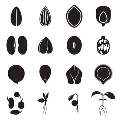Seed icon set, which represents the most common types of crop seeds such as beans, buckwheat, wheat, sunflower, pumpkin, castor, soy etc. and germination of seeds and sprouts. Vector illustration