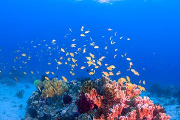 School of colorful fish on coral reef in ocean