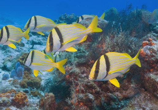 Tropical fish beach underwater reef sea life