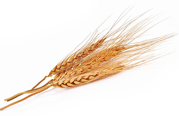 barley ear over a white background