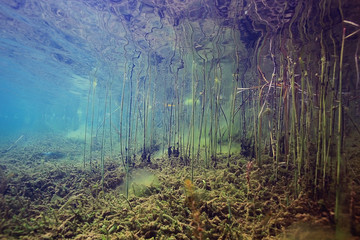 Underwater World on the lake, reeds and clear water