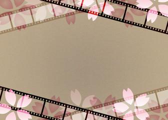 フィルムと桜